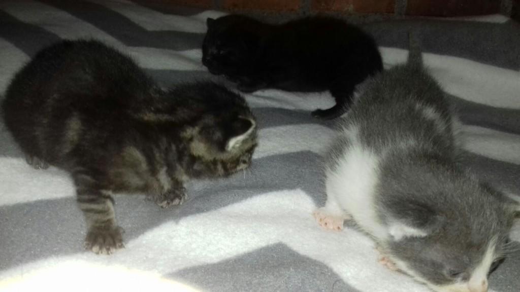 kittens01